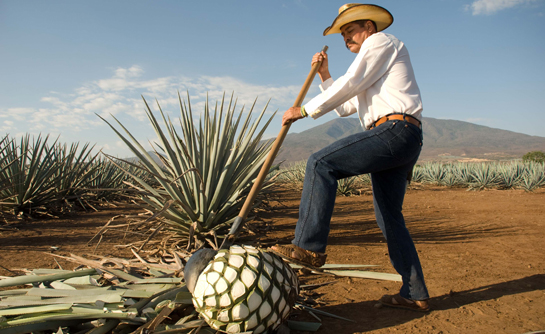 Circuito del Tequila