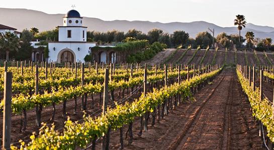 Ruta del Vino: Valle de Guadalupe