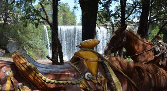 Wejoytrip | Que hacer - Paseo en caballo en Mexiquillo